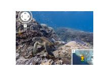 Google StreetView bevat nu ook onderwaterfoto's